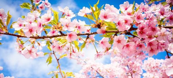 Wohnzimmerideen – bringen Sie Frühling in Ihr Wohnzimmer Wohnzimmerideen     bringen Sie Fru  hling in Ihr Wohnzimmer feature 600x270